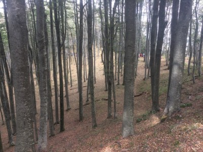 Klimt Experience – Un'esperienza avvolgente